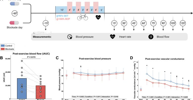 Histamine H1 and H2 receptors are essential transducers of the integrative exercise training response in humans