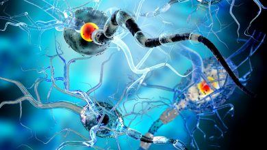 Immune checkpoint inhibitors increase the risk of neurological toxicities