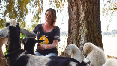 As goat yoga stretches across US, state law stifles Oregon rise