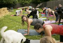 Baaaaa! Nashville goat yoga business sees growth, seeks out smiles | Life