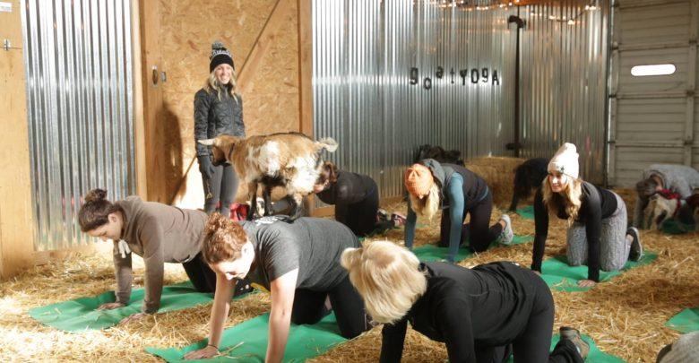 Inside the Original Goat Yoga business