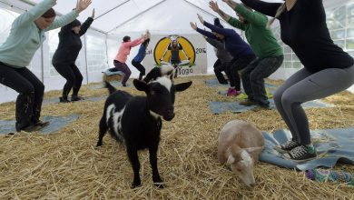 Goat yoga craze: Oregon yoga business goes viral