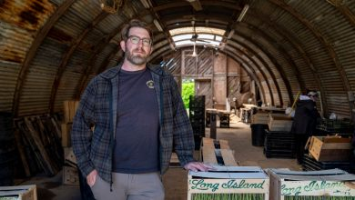 Centuries-old farming tradition goes on in Riverhead as Wells family sells lands to county preservation effort