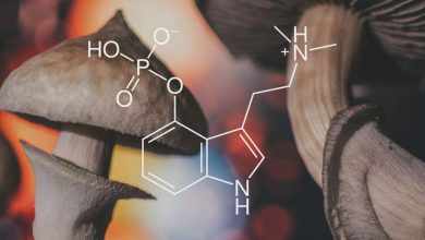 According to Mydecine Innovations Group Inc., its R&D team has made breakthrough advances in psilocybin research with the discovery of over 40 compounds