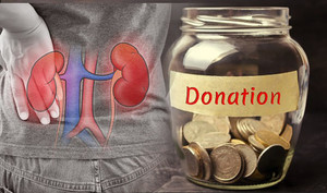 Long-term survival similar for kidney donors, general population