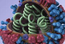 Influenza virus, credit: CDC/illustrator: Dan Higgins