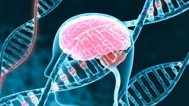 Researchers have identified a new gene that may increase a person's risk of developing ALS