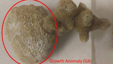 Understand the molecular basis of coral disease