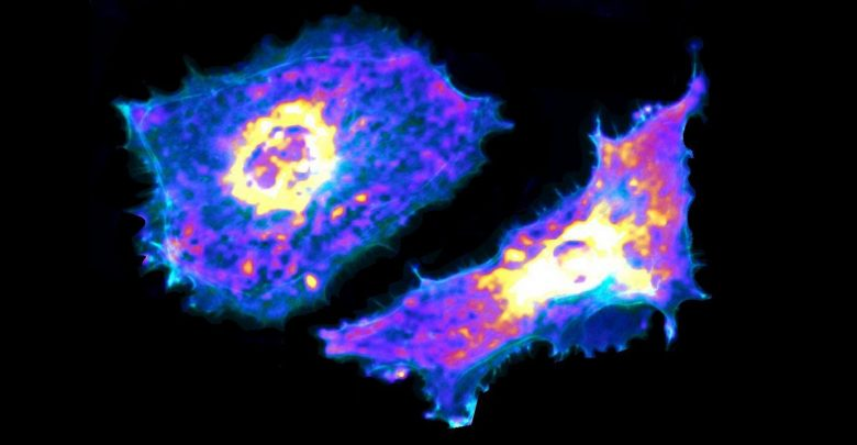 Visualize Metabolic Process at the Single-Cell Level