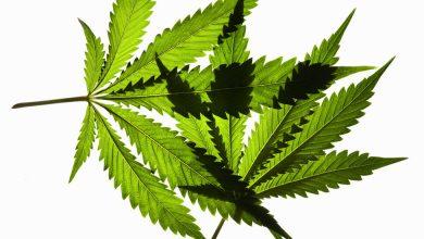 Can Marijuana Make You a Better Athlete?