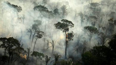 Amazon rainforest now releases more carbon than it absorbs: study