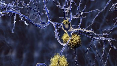 Longer reproductive windows could increase the risk of Alzheimer's disease