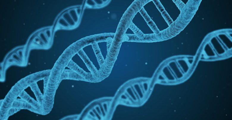 Investigation of the mechanisms of photoreceptor degeneration