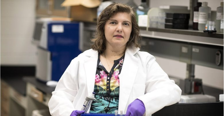 UVA researchers overturn conventional wisdom on action of key hormone receptors within cells