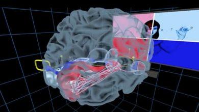 UW Virtual Brain Project