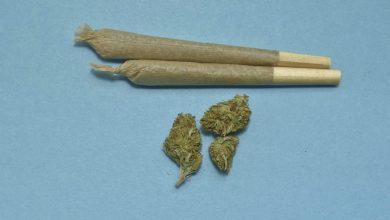 Was ist die Wissenschaft über Cannabis?