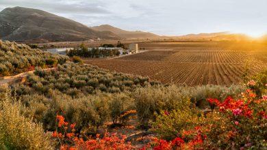 A quick look at Baja's long winemaking history