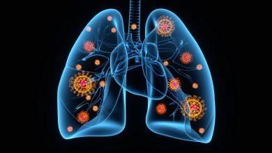 coronavirus disease 2019 covid lungs illustration