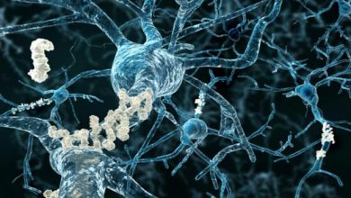 """""""New wave of Alzheimer's research"""" looks for clues in the liver"""