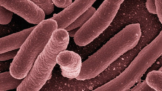 Improve treatment of tuberculosis    Technology networks